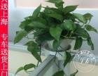上海植物出租专业办公用花租摆 优惠的价格优质的服务