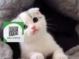 徐州哪里有宠物店 徐州哪里卖宠物猫便宜 徐州折耳猫价格