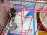 家养两个小猫找新家