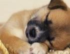 合肥恋宠宠物医院让宝贝不再痛苦