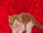 猫咪宝贝常年出售加菲猫,异短,美短,波斯猫,英短蓝