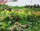 北京定做绿植墙仿真植物墙厂家