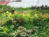 北京定做綠植墻仿真植物墻廠家