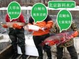北京新科水产大量草鱼苗上市价格 大草鱼出售 草鱼苗夏花养殖场