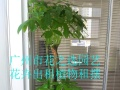 炎热夏季专业緑植租摆养护办公室緑植租赁免费上门管理