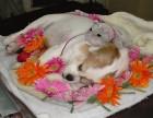 上海宝山宠物火化服务大华地区宠物殡葬免费上门接送