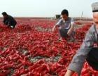 新疆乌鲁木齐库尔勒大量出售各种干辣椒
