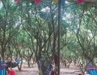 元旦公司一日游深圳周边九龙山玩转农家乐