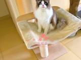 长春哪里有正规猫舍 长春出售布偶猫 纯种布偶猫价格