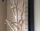 真树树杈艺术品