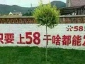 南阳58平台广告投放