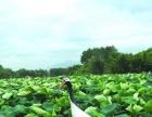青龙镇:元龙畲族乡村旅游点