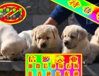 买纯种健拉布拉多犬 赠送用品 - 签质保协议