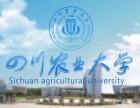 2018年新津成人大学大专本科报名中专业多全国认可