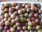 广西产地现摘五斤百香果鸡蛋果西番莲5斤中大果包邮