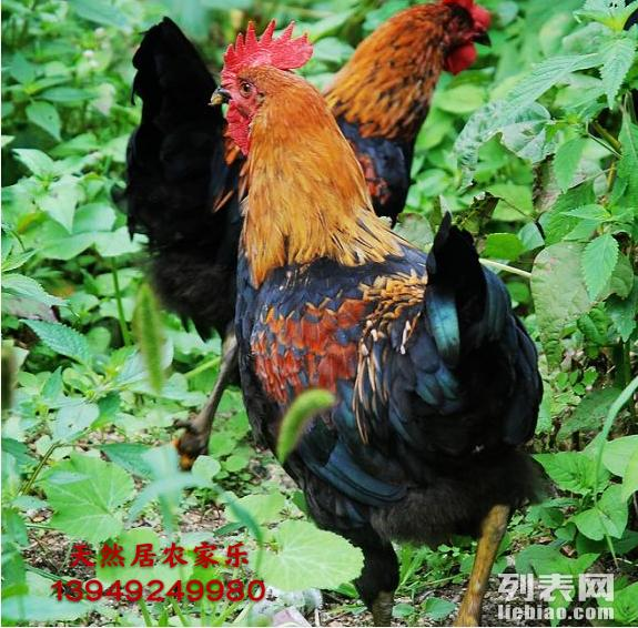 栾川 天河大峡谷 农家乐欢迎您的到来