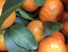 砂糖橘销售(精品盒装)