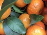 砂糖橘銷售 精品盒裝