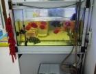 1.2米底过滤鱼缸(含9条血鹦鹉和2条十间)