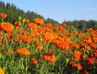 东莞长安让人向往的田园生活松山湖农家乐松湖生态园原生态体验