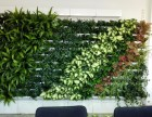 室内植物墙 仿真植物墙