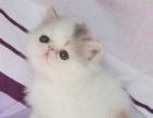名猫荟萃大场面.特大消息.50多只世界名猫空降西安