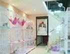 南京CFA家庭猫舍,明码标价,可以上门看猫猫,美短