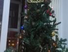 未开封的圣诞树