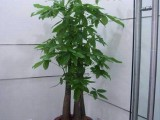 上海绿植租摆上海植物租赁松江区植物租摆全市价格低
