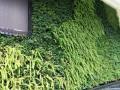 成都俊传明科技有限公司I专业植物墙施工服