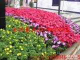 成都办公室植物租赁 花卉出租 植物租摆