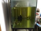 锦鲤鱼龙鱼缸