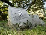 贵阳宠物火化宠物殡葬,家庭宠物火化