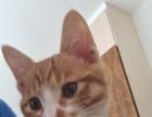 猫咪上门洗澡喂养剪指甲全套服务