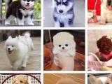 肇庆大型狗场丨直销各类世界名犬丨可视频挑选送宠上门