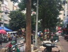 台江十字路口沿街7门面25米,年租40万店面出售