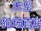 长沙较大狗场繁殖基地出售各类世界名犬-活送用品