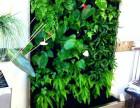 绿植墙 仿真绿植墙 绿植装饰