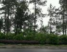 万紫千红植物园以南三公里地 60000平米