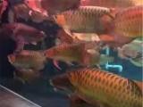 承接各大單位及個人魚缸清洗維護