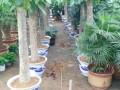 光明新区绿植租摆,园林绿化,绿化养护,各种花卉盆栽,花场直销