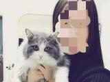 新生蓝猫开始预定了,图片真实