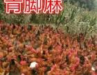 鸡鸭鹅苗低价出售!保证98%成活率,包市场价收购