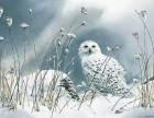水彩花鸟画,栩栩如生可临摹,更养眼!