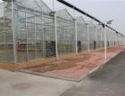 安徽芜湖芒果育苗栽培技术大棚 阳光板温室大棚建设厂家