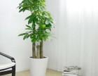 广州公司绿植盆栽 办公室植物花卉 24小时送货上门