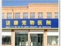 东营诺康宠物医院:猫咪拉肚子不要着急!