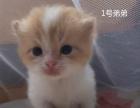 买猫指南、猫种大全、买猫注意事项