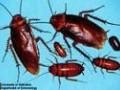 南京灭蟑螂公司 专业杀蟑螂公司 专业除蟑螂公司