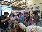 上海嘉定区羊驼出租展览-草泥马出租-小羊驼租赁-婚礼庆典展览